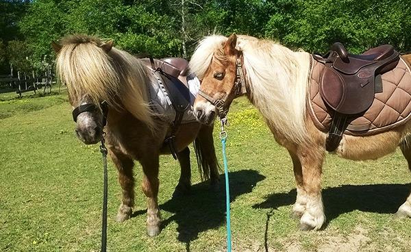 Activité - Approche éthologique du cheval
